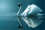 Enchanted Swan