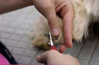 corte de uñas en el perro