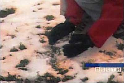 Salju berwarna-warni jatuh di Siberia