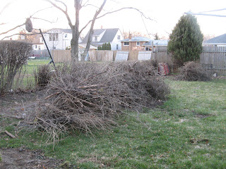 The brush pile after trimming the hedge