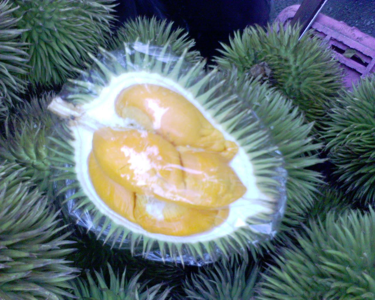 TERATAK SENJA: Durian Hutan