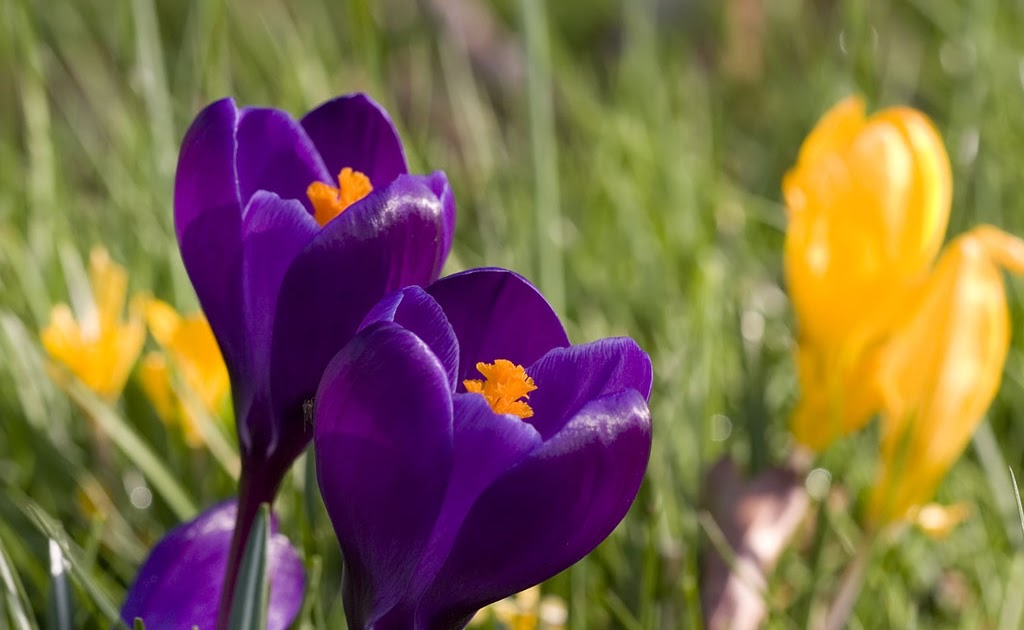 Crocus Weather And Then Some >> Mabley Green Meadow: Mabley Meadow Spring Guide