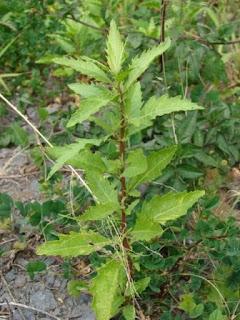 Blog de plantas