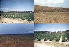 Plantaciones comerciales de Aloe vera en la Península de Araya - Venezuela