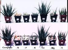 Deficiencia mineral en Aloe vera