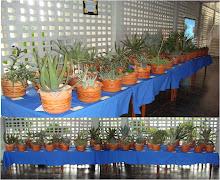 Especies de Aloe