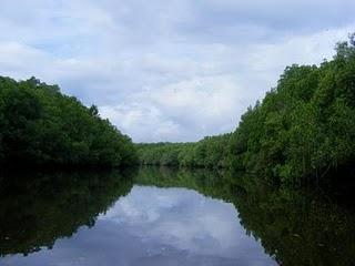 wisata mangrove banyuwangi