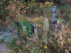 Garten Eins ganz am Anfang