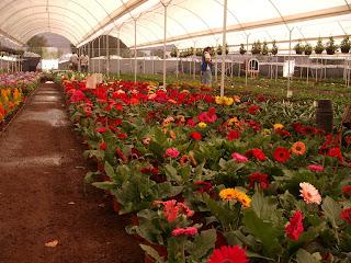 Fotos videos flores viveros en atlixco for Viveros de plantas en atlixco