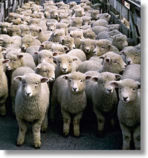 http://4.bp.blogspot.com/_xvvXWhjHc90/TDHorJFY0bI/AAAAAAAABpY/cEdGP1p6SCQ/s1600/moutons-1.jpg