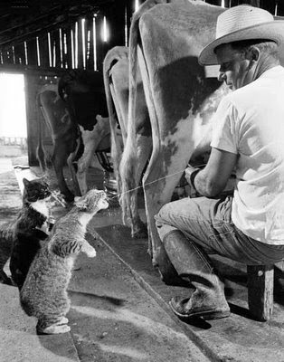 cats and cow