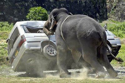 angry elephant pushes car photo