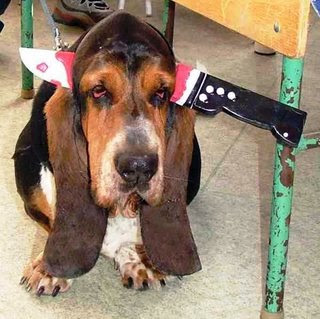funny photo of hound dog dressed up for halloween with a knife and blood in its head with droopy eyes