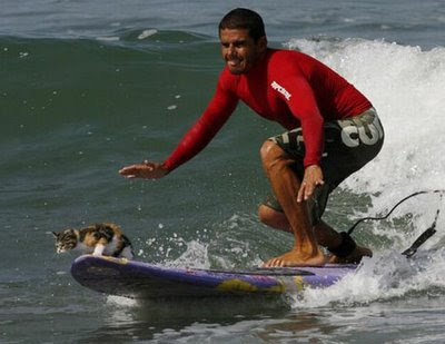 funny animal photos cat surfing on surfboard