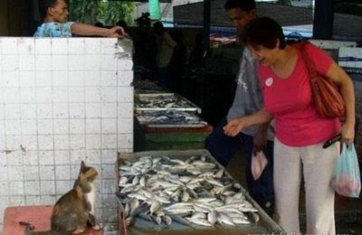 funny photo of cat selling fish possibly catfish