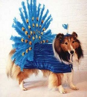 funny photos peacock dog dress ups