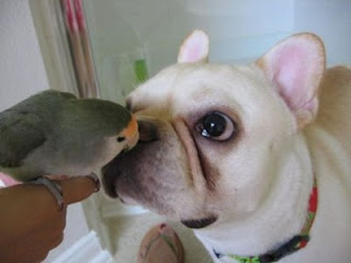 curious bird and dog photo