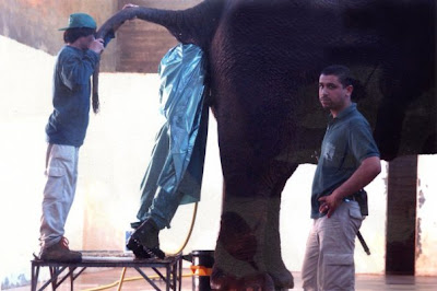 elephant vet worlds worst jobs
