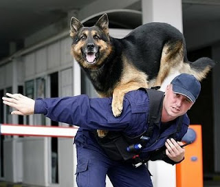 balancing clever police dog