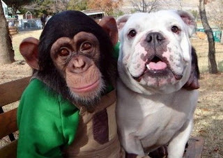 chimpanzee and dog posing for photo