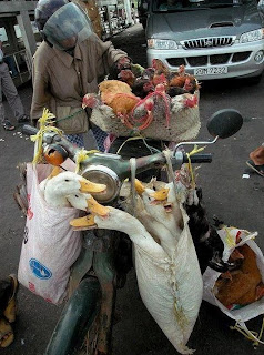 funny photo overloaded bike with chickens and ducks in bags