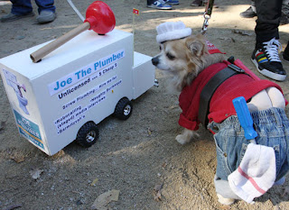 funny photo of joe the plumber dog in outfit with truck