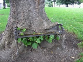really funny photo of tree eating a chair in park