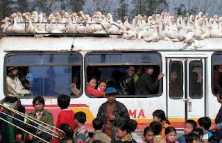 really funny bus photos geese sitting on top maybe dont want to fly south for winter