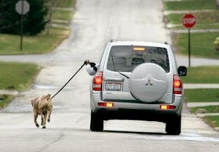 funny photo of person walking a dog with their car cheating