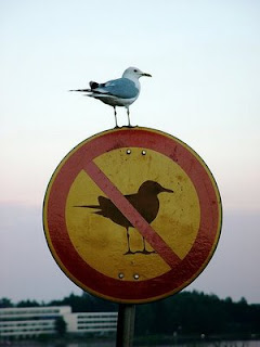 really funny sign no birds allowed gull ignoring the rules photo