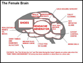 funny photos diagram of the female brain anatomy