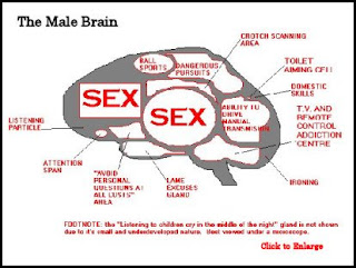 funny photos of diagram explanation of the male brain