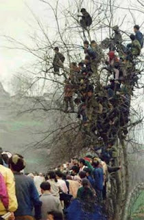 funny photo of spectators watching football or sports match from a tree crazy