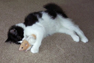funny animal photos black and white cat and brown and white hamster friends