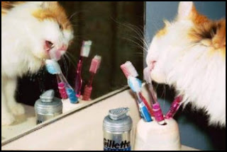 funny cat photo brushing teeth or licking toothpaste