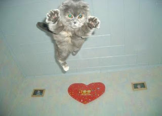 funny animal pictures flying leaping gray cat