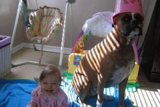 funny dog photos cute boxer dog wearng pink bucket on his head with child