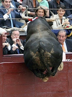 funny bullfight photo of bull leaping or jumping into crowd men scared