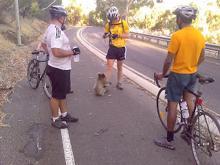 funny cute koala photo waiting for a drink of water from bike rider