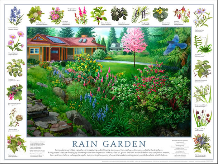 good nature notes  rain garden poster special offer