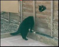 gatos mischuminadas