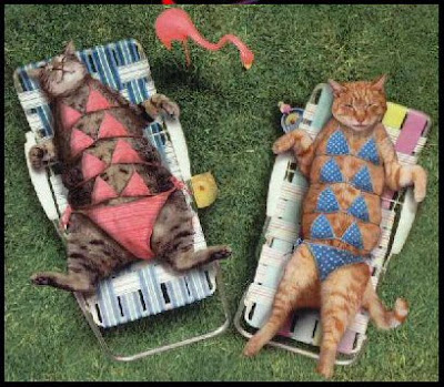 gatos tomando el sol mischuminadas