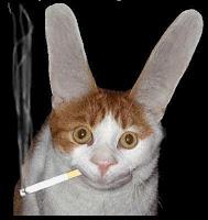 gato mischuminadas