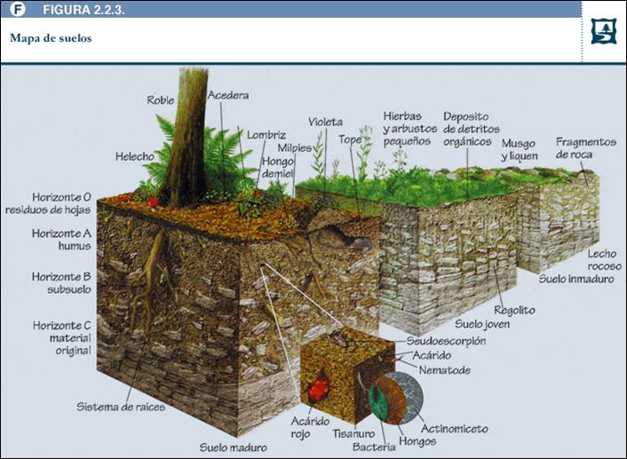 An lisis industriales unidad ii suelos for Que es la clausula suelo de los bancos