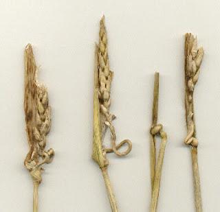 Círculos cosechas - crop circles  Crop%2013