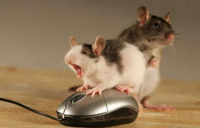 mouse threesome