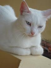 minha gata