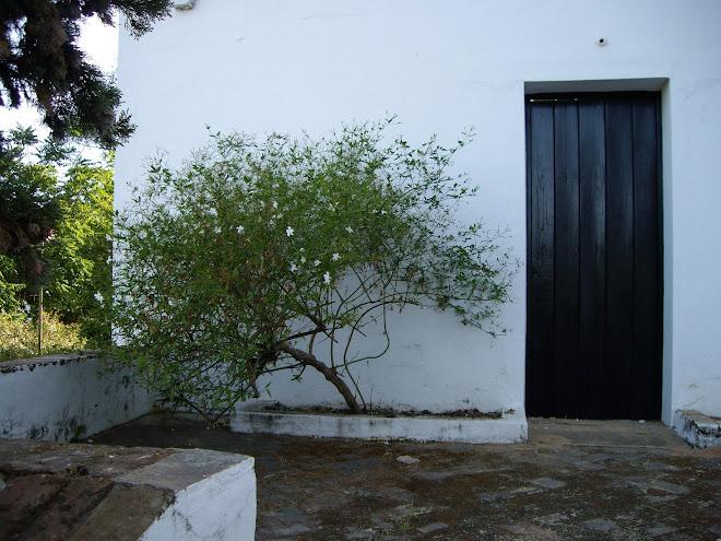 Puerta y Jazmín
