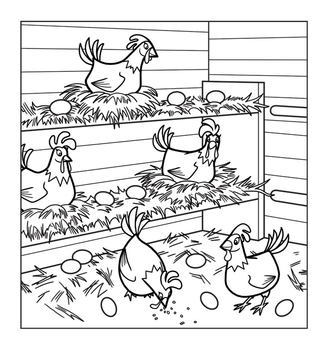 The Chicken Coop Is Also To Illustrate Ovals