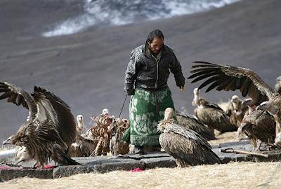 Un enterrador alimenta a los buitres con los restos de un muerto durante una ceremonia fúnebre en un templo de Dari, en el Tíbet.